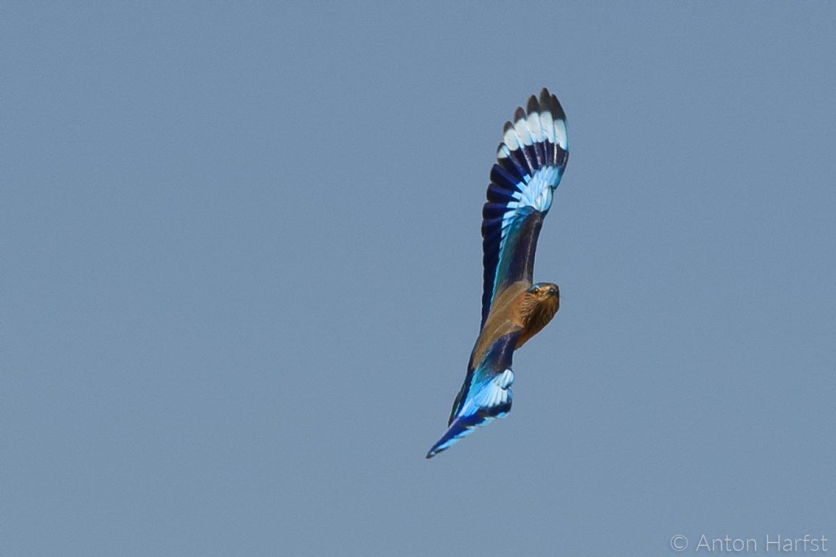zo vrij als een vogel