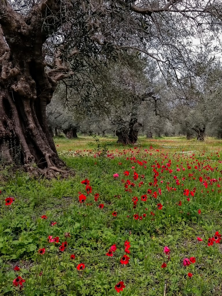 Voorjaar in Griekenland