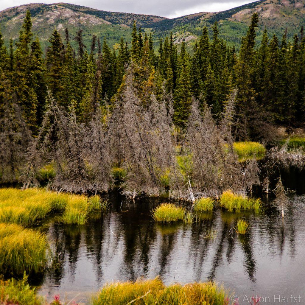 Sulphur Creek Yukon