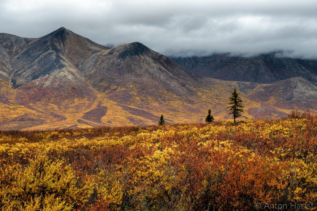 Tombstone Park Yukon