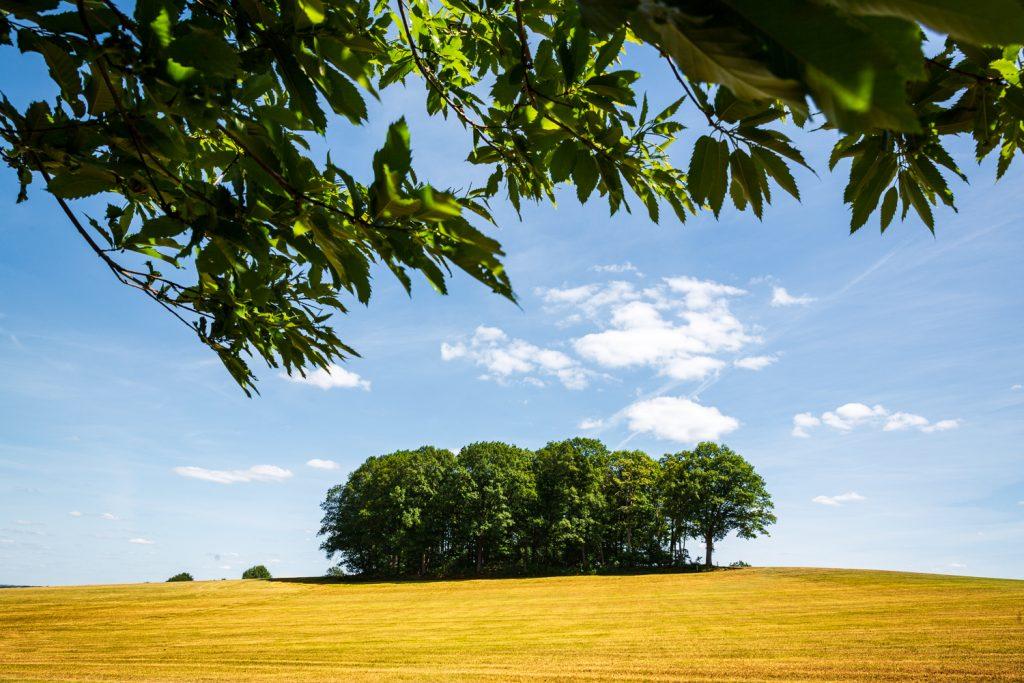 Heuvellandschap met bomengroep op akker