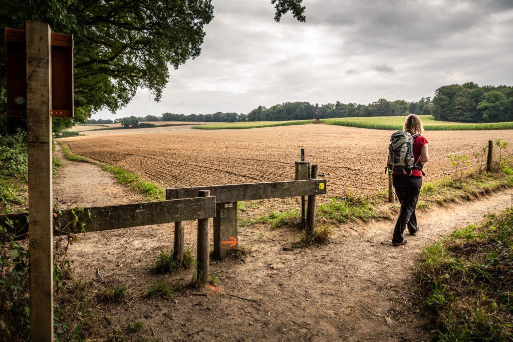 wandelaar in heuvelland rond Berg en Dal