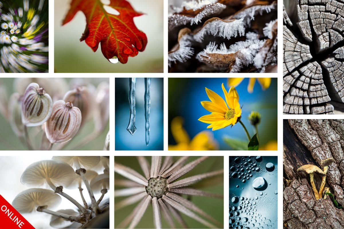 macrofoto's collage winter