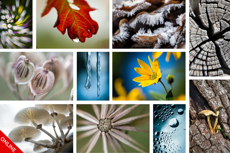 Creatieve Macrofotografie Winterspecial beginners
