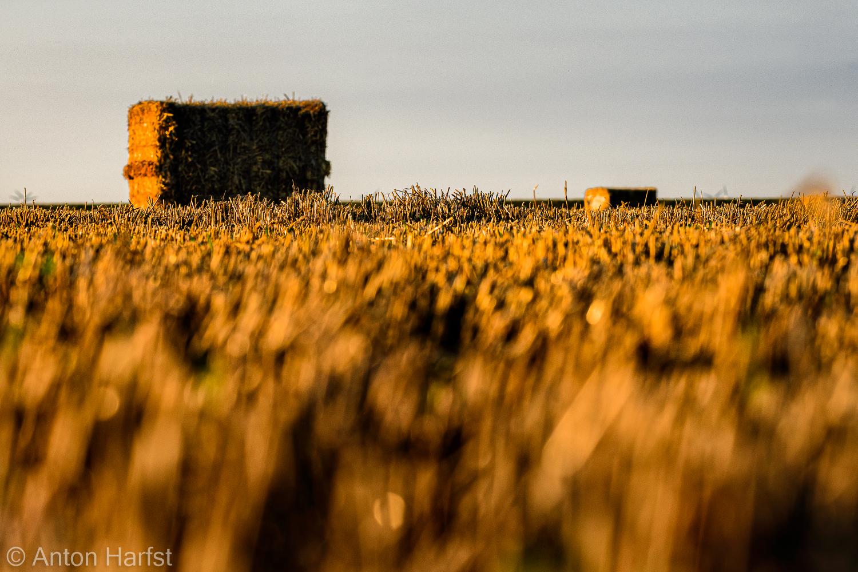 Fotoreis rond de Dollard | Boerenland en wad