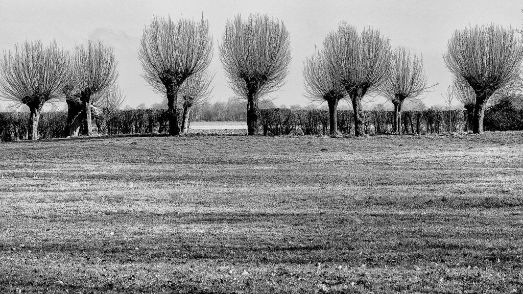 Fotowandeling leent zich ook voor zwart-wit fotografie