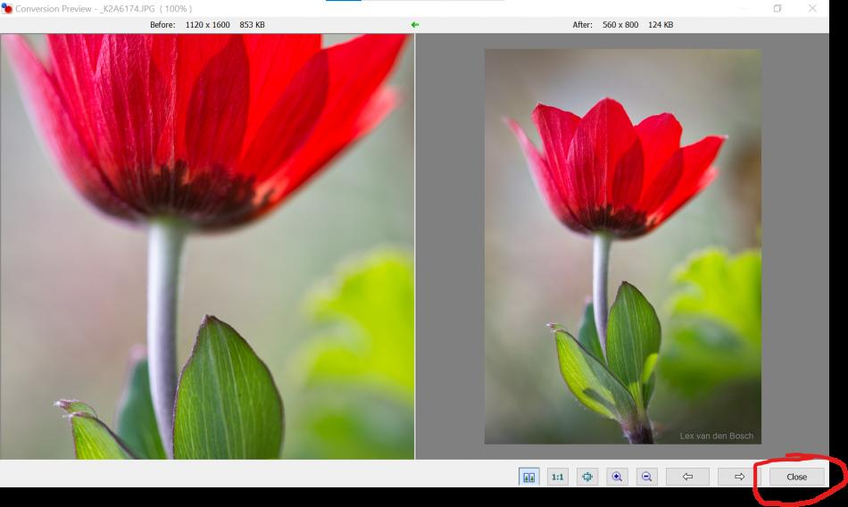 originele en verkleinde foto in het conversion preview window van Photo Resizer