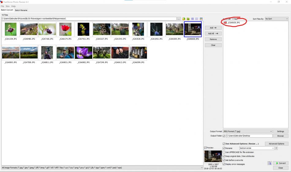 De foto staat nu klaar in het rechterpaneel van Photo Resizer om verkleind te worden