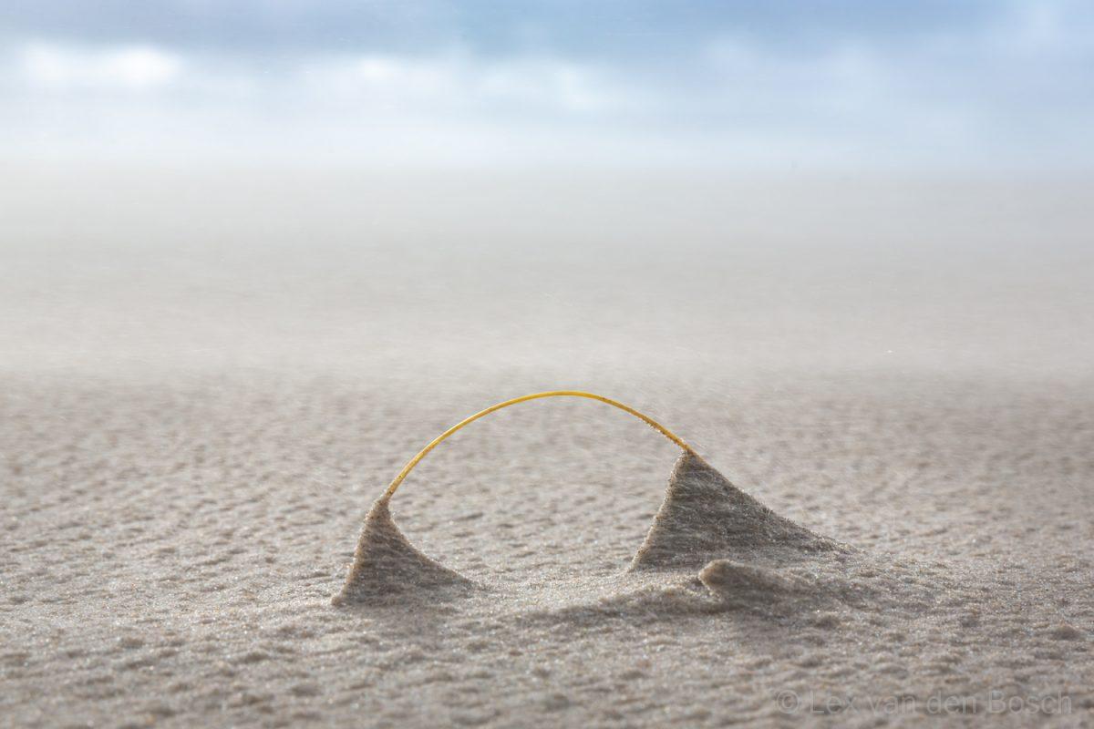 Detailfotografie: een omgebogen spriet helmgras op het strand van Texel laat zien hoe duinvorming begint op een stormachtige dag..