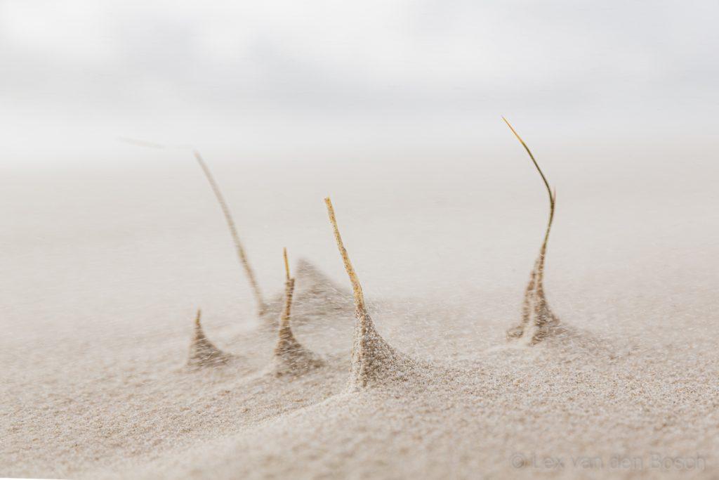 Sprieten helmgras op het strand van Texel verzamelen zand bij stormachtig weer.